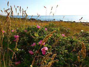 Natur vid havet i Halland