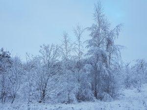 Vinterlandskap Halmstad